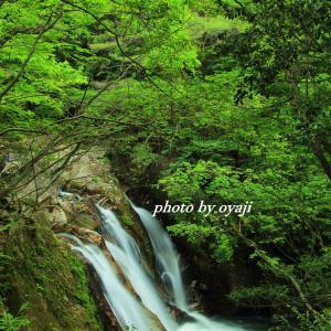 新緑のころ  三筋の滝