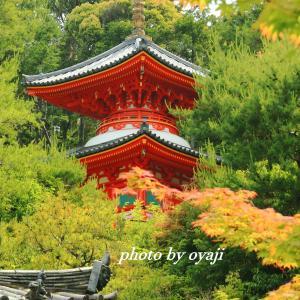 新緑の今熊野観音寺