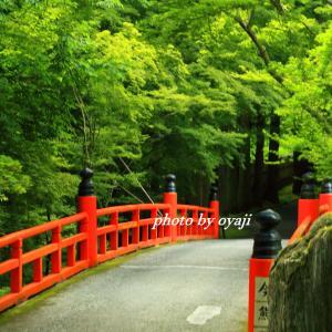 新緑に映える鳥居橋