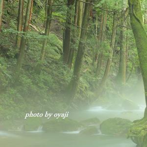 靄が立ち込める渓流