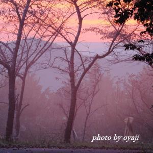 霧の中の朝焼け