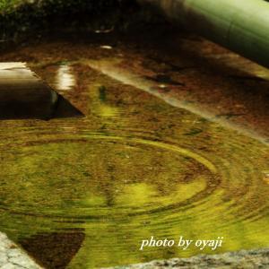 新緑写る水面に波紋