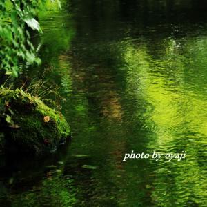 地蔵川の緑