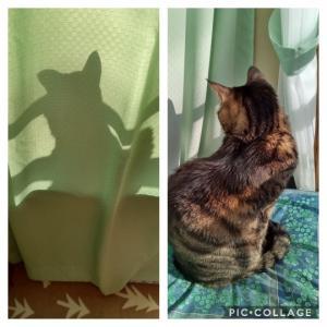 おはよう☆愛猫トラ次郎の日光浴!