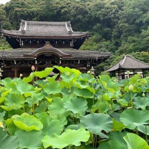 三室戸寺へ行きました。