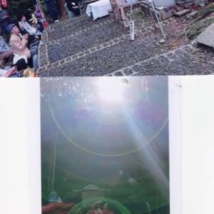 ゼロ磁場 西日本一 氣パワー開運引き寄せスポット 榊の木無事植えられる(11月23日)