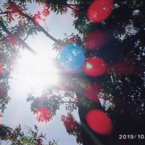 ゼロ磁場 西日本一 氣パワー開運引き寄せスポット  ゼロ磁場の空(12月11日)