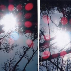 ゼロ磁場 西日本一 氣パワー開運引き寄せスポット 木霊はすごい力(5月24日)