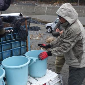 1月18日(土)冬季C&R釣場(本流にじます)情報