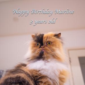 マーリン3歳になりました♪