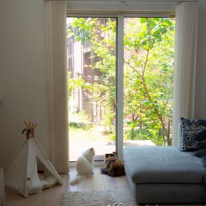 晴れた日&ペルシャ猫の身体能力