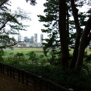 多摩川台公園を久し振りに歩く