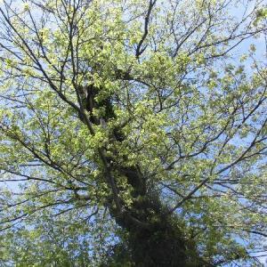 借景の大木を望む2階LDK