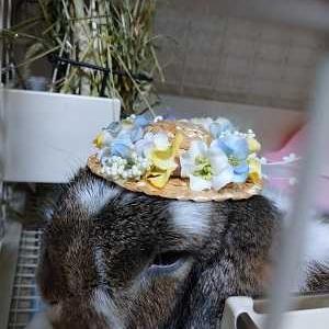今年も帽子をかぶったよ