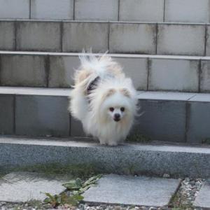階段ステップ~♪