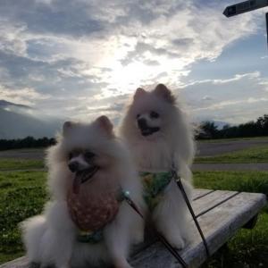 朝日と雲を背に~♪