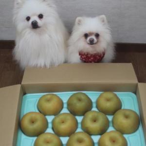 梨が届いた~♪