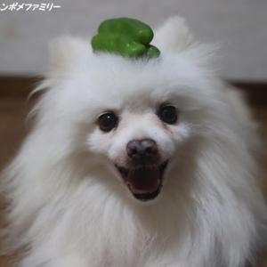 ピーマンは、帽子~♪