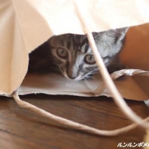 紙袋in~♪