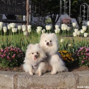 春の花壇~♪