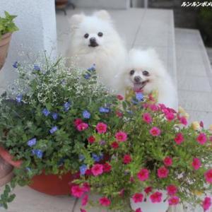 夏のプランター花盛り~♪