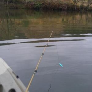【釣れる気がするのは】土曜会速報【気のせいです】
