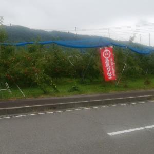 沼田のりんご