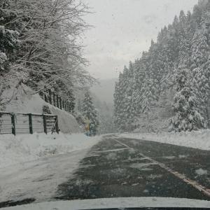またも雪に