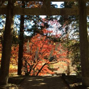 岩村 武並神社〜美しい紅葉でした〜残念なことも チャンスだ‼️笑