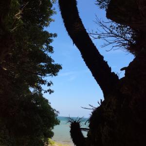 沖縄ひとり旅〜外出から 帰ったら 手洗い うがいだけでなく◯◯も‼️