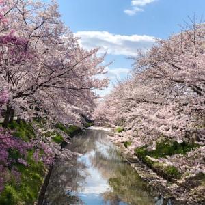 たこやきと、桜と、新学期と。