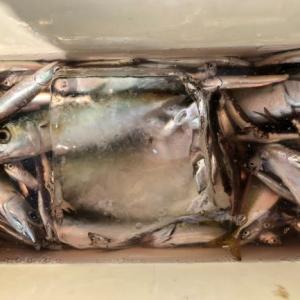 海釣りと、イワシ三昧の晩御飯。