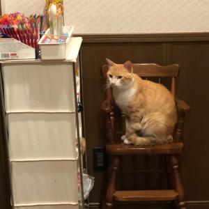 猫ちゃん達  ฅ^ ̳• ·̫ • ̳^ฅ