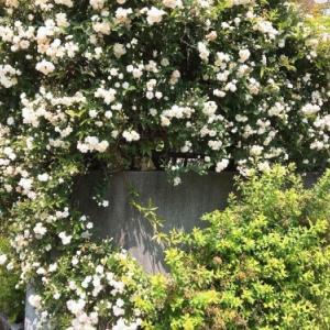 バラに囲まれた陶板!