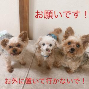 """日曜日のワンコです。""""【大嫌い】犬と暮らす者として考えられへん!!"""""""
