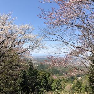 お花見🌸⛰物見山