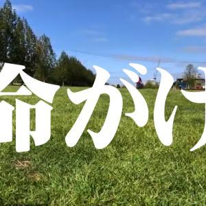 【エミ散歩】エミレーツと全天然芝超巨大公園を散歩しながらひたすら質問に答える【命がけ】