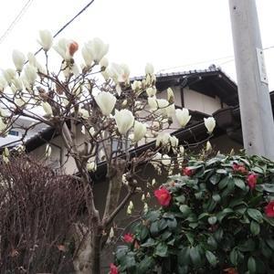 三月の花🌸おさらい編