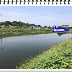 川釣りに行ってみた!