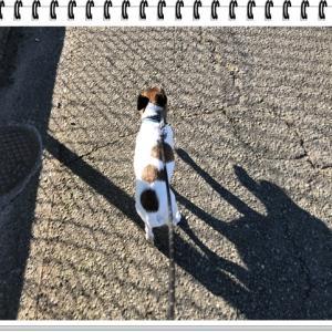 待たされる犬