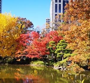 日比谷公園 紅葉・黄葉、真っ盛り 日比谷ミッドタウンでランチ 1219-12-03