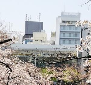 千鳥ヶ淵の桜 2020-03-26