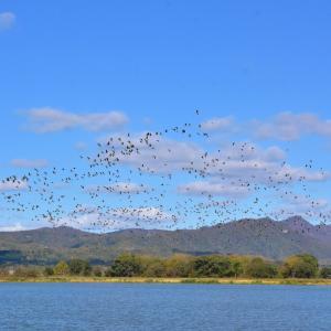 「宮島沼」に行ってみた、渡り鳥の国内最終中継地との事!