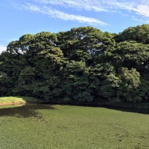 チョウトンボの池