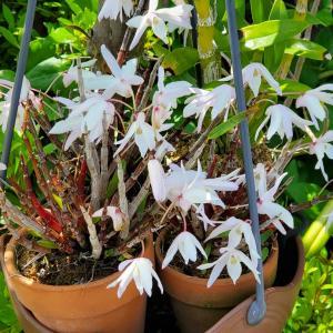 5月のお花たち 我家の庭
