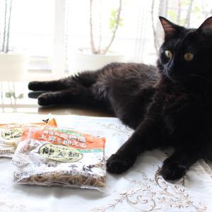 「また食べられない」ガッカリする猫