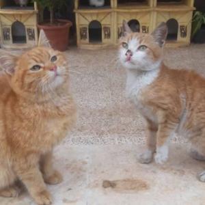 空爆の中、1頭でも多くの猫を救おうとする人たち