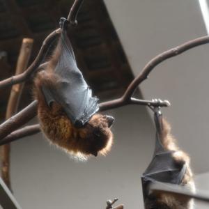 【動画】感染源と言われるコウモリを食べる武漢市の中国人