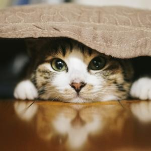 飼い主が急逝 部屋に残された猫