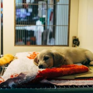 ペットショップで犬・猫・ウサギの販売を禁止 NY州